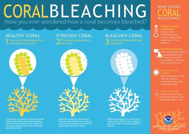 coralbleaching-large.jpg