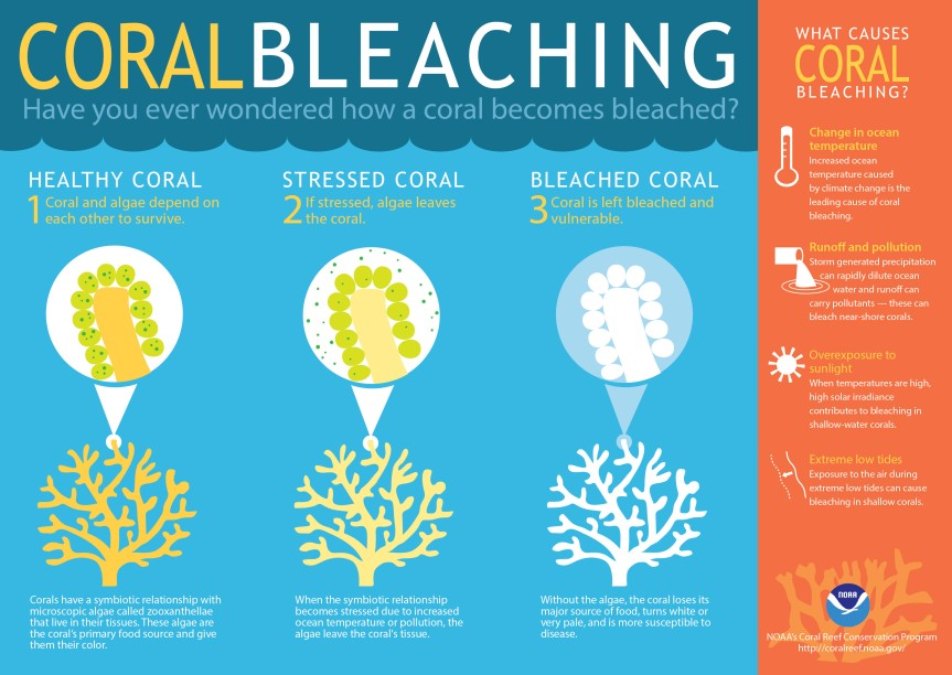 coralbleaching-large.jpg
