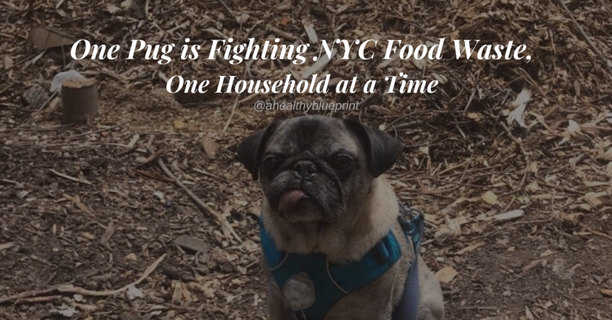 How One Pug is Fighting Food Waste in NYC, One Household at a Time